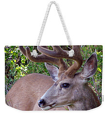 Weekender Tote Bag featuring the photograph Buck In The Woods by Athena Mckinzie