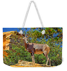 Weekender Tote Bag featuring the photograph Desert Bighorn Sheep by Greg Norrell