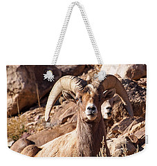 Desert Bighorn Sheep Weekender Tote Bag by Nadja Rider