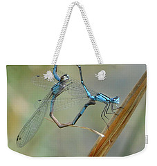 Dragonfly Courtship Weekender Tote Bag by Amy Porter