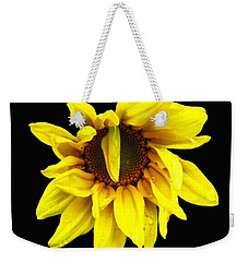 Droops Sunflower With Oil Painting Effect Weekender Tote Bag by Rose Santuci-Sofranko
