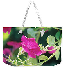 Weekender Tote Bag featuring the photograph Early Morning Petunias by Alan Lakin
