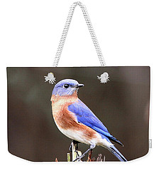 Eastern Bluebird - The Old Fence Post Weekender Tote Bag