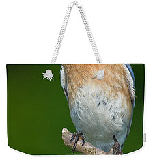 Eastern Bluebird With Katydid Weekender Tote Bag by Jerry Fornarotto