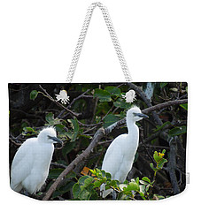 Egret Chicks Waiting To Be Fed Weekender Tote Bag