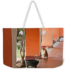 Weekender Tote Bag featuring the photograph El Gato by Marcia Socolik