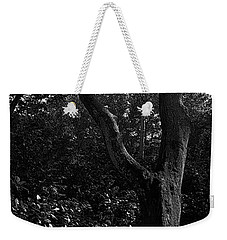 Weekender Tote Bag featuring the photograph Elizabethan Gardens Tree In B And W by Greg Reed