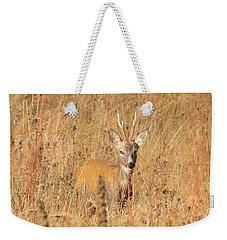 European Roe Deer Weekender Tote Bag