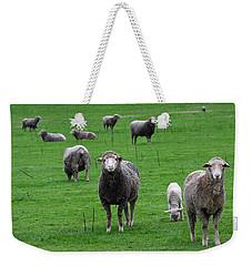 Ewes And Lambs Weekender Tote Bag