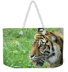 Weekender Tote Bag featuring the photograph Eye Of The Tiger by Lingfai Leung