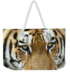 Weekender Tote Bag featuring the photograph Eyes Of The Tiger by John Haldane