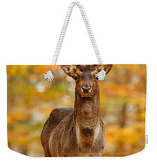 Fallow Deer In Autumn Forest Weekender Tote Bag by Roeselien Raimond