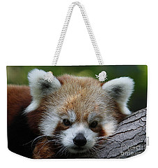 Weekender Tote Bag featuring the photograph Fire Fox by Judy Whitton