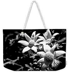 Weekender Tote Bag featuring the photograph Flannel Flower by Miroslava Jurcik
