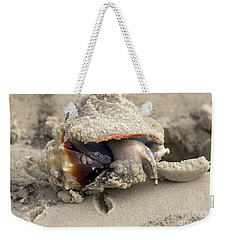Weekender Tote Bag featuring the photograph Florida Fighting Conch by Meg Rousher