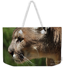 Weekender Tote Bag featuring the photograph Florida Panther Profile by Meg Rousher