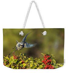 Flying Florida Scrub Jay Photo Weekender Tote Bag