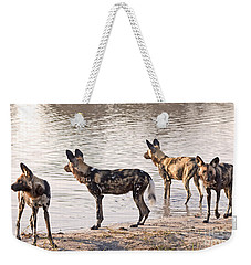 Weekender Tote Bag featuring the photograph Four Alert African Wild Dogs by Liz Leyden