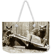 Weekender Tote Bag featuring the photograph Fun With Cats Henry King Nourse Photographer Circa 1900 by California Views Mr Pat Hathaway Archives