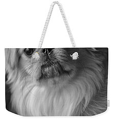Weekender Tote Bag featuring the photograph Fuzzface by Kristi Swift
