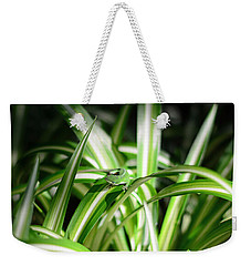 Gecko Camouflaged On Spider Plant Weekender Tote Bag by Connie Fox