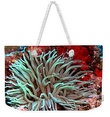 Giant Green Sea Anemone Against Red Coral Weekender Tote Bag