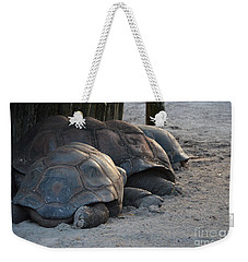 Weekender Tote Bag featuring the photograph Giant Tortise by Robert Meanor