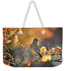 Weekender Tote Bag featuring the photograph Glowing Robin 2 by Nava Thompson