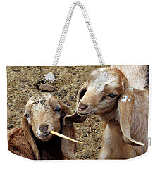 Weekender Tote Bag featuring the photograph Goats #2 by PJ Boylan