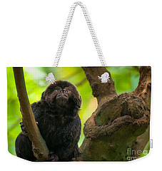 Weekender Tote Bag featuring the photograph Goeldi's Callimico by Bianca Nadeau