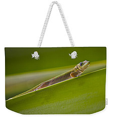 Gold Dust Day Gecko Weekender Tote Bag by Venetia Featherstone-Witty