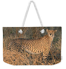 Golden Cheetah At Sunset Weekender Tote Bag by Tom Wurl