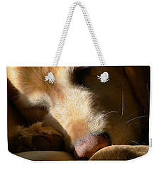 Golden Retriever Dog Sleeping In The Morning Light  Weekender Tote Bag by Jennie Marie Schell