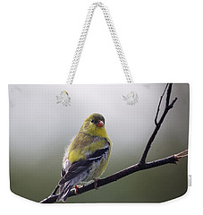 Weekender Tote Bag featuring the photograph Goldfinch Molting To Breeding Colors by Susan Capuano