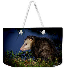Weekender Tote Bag featuring the photograph Good Night Possum by Olga Hamilton