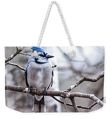 Gorgeous Blue Jay Weekender Tote Bag by Cheryl Baxter
