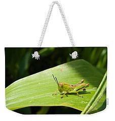 Grasshopper On Corn Leaf   Weekender Tote Bag