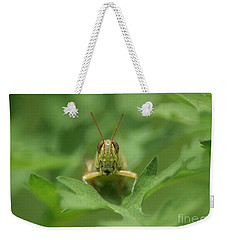 Weekender Tote Bag featuring the photograph Grasshopper Portrait by Olga Hamilton