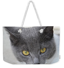 Gray Cat - Listening Weekender Tote Bag by Tine Nordbred