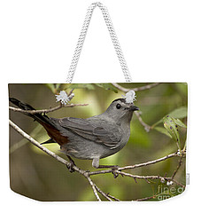 Weekender Tote Bag featuring the photograph Gray Catbird by Meg Rousher