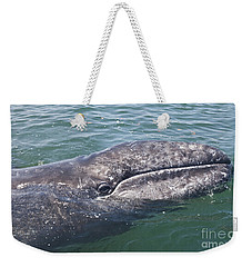 Gray / Grey Whale Eschrichtius Robustus Weekender Tote Bag by Liz Leyden