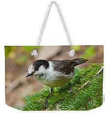 Gray Jay On Fir Tree Weekender Tote Bag