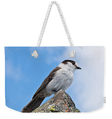 Gray Jay With Blue Sky Background Weekender Tote Bag
