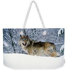 Gray Wolf In Snow, Montana, Usa Weekender Tote Bag
