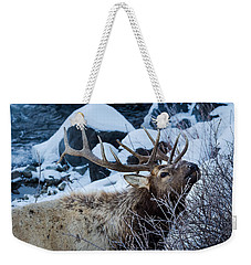 Weekender Tote Bag featuring the photograph Grazing Elk by Michael Chatt