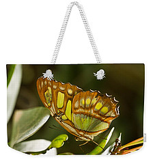 Green And Brown Tropical Butterfly Weekender Tote Bag