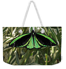 Weekender Tote Bag featuring the photograph Green Butterfly by Brenda Brown