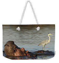 Grey Heron On Hippopotamus Kruger Np Weekender Tote Bag by Perry de Graaf