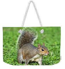 Weekender Tote Bag featuring the photograph Grey Squirrel by Antonio Scarpi