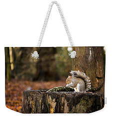 Grey Squirrel On A Stump Weekender Tote Bag by Spikey Mouse Photography